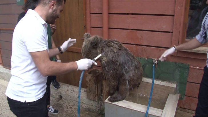 (Özel) Yavru ayı Diva banyo yaptı, vatandaşlar ilgiyle izledi