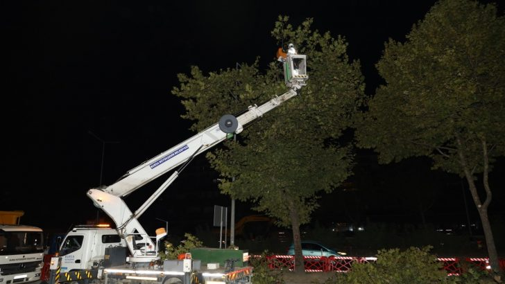 Yeni metro hattındaki ağaçlar kesilmek yerine taşındı