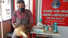 Mudanya'da su kabağı dünyası