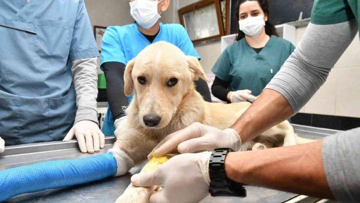 Samsun'da 2 bin 83 hayvanın tedavisi yapıldı