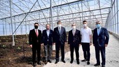 Türkiye'de ilk… OSB'ye muz serası kuruldu